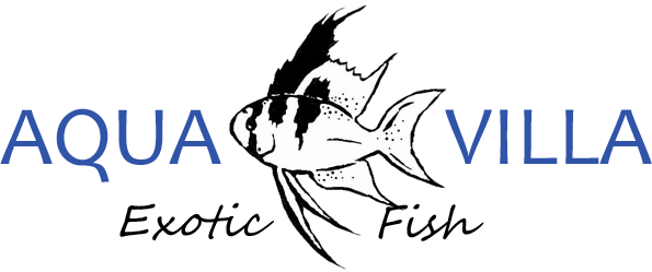 aquavilla-exotic-fish-logo-1502185579